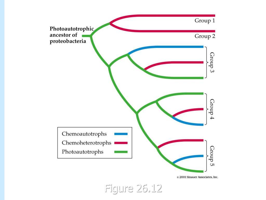 figure 26-12.jpg