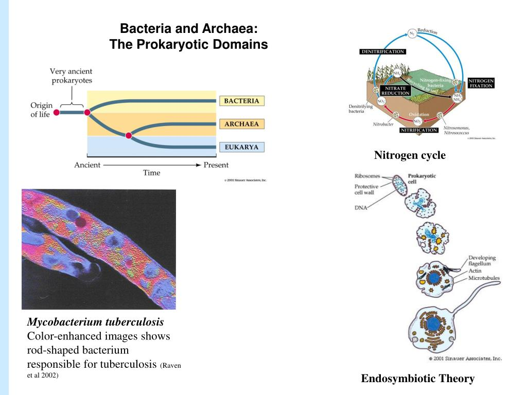 Bacteria and Archaea: