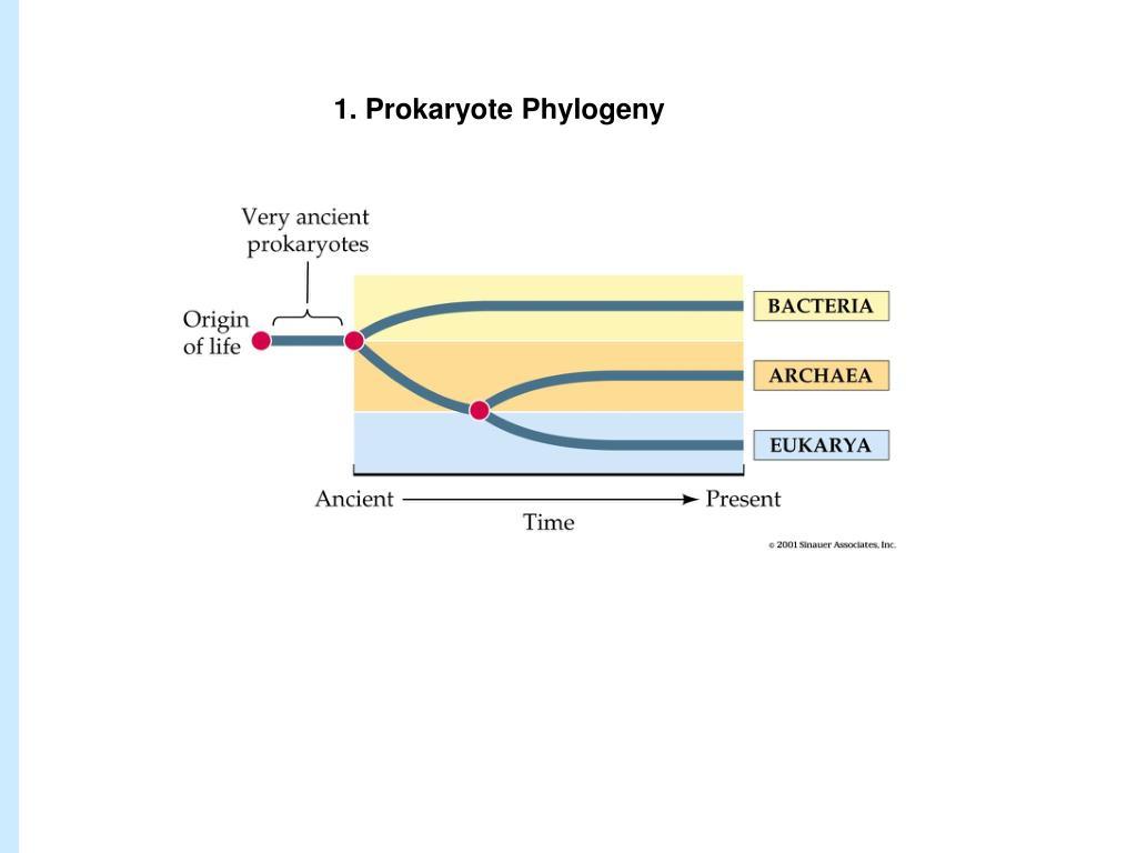 1. Prokaryote Phylogeny