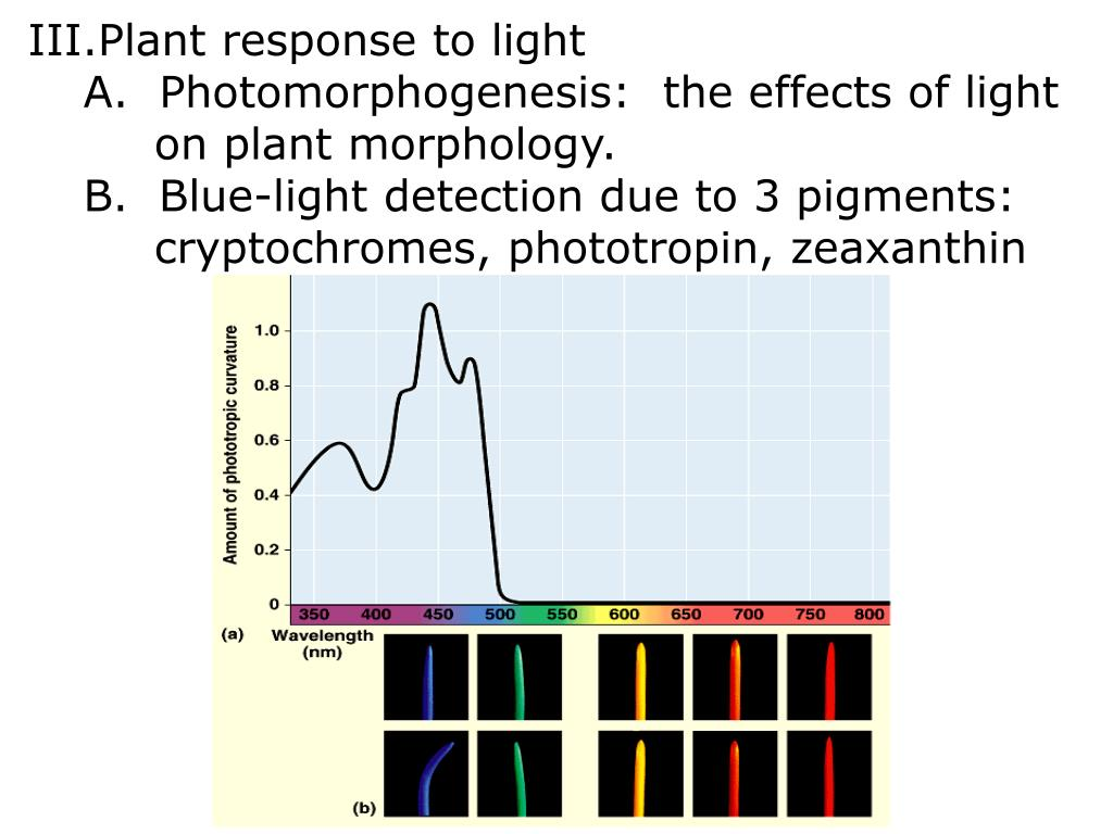 Plant response to light