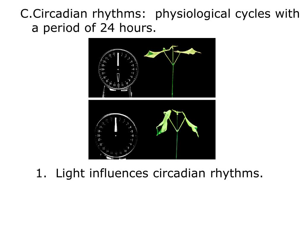 Circadian rhythms:  physiological cycles with
