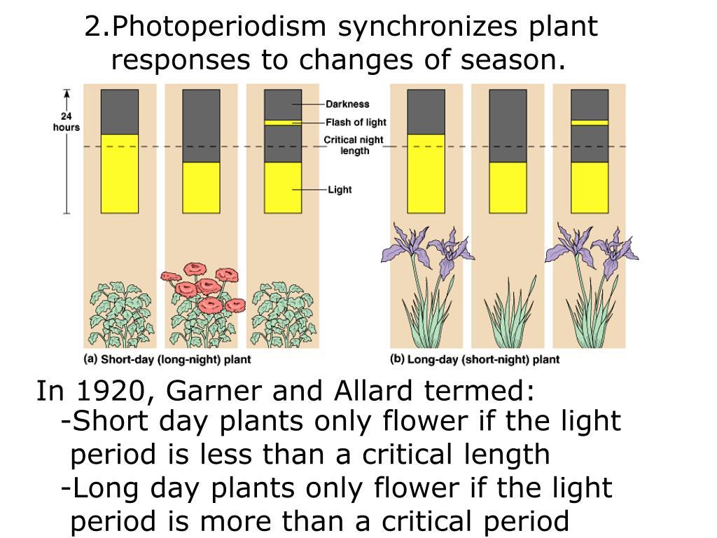 Photoperiodism synchronizes plant