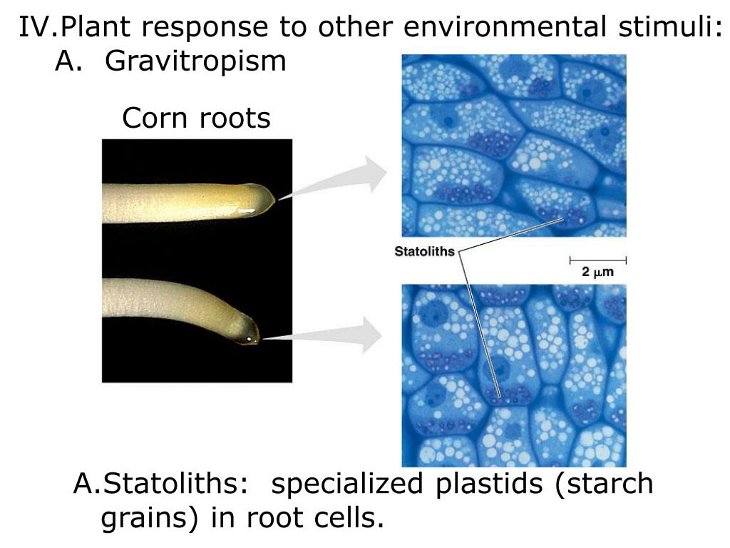 Plant response to other environmental stimuli: