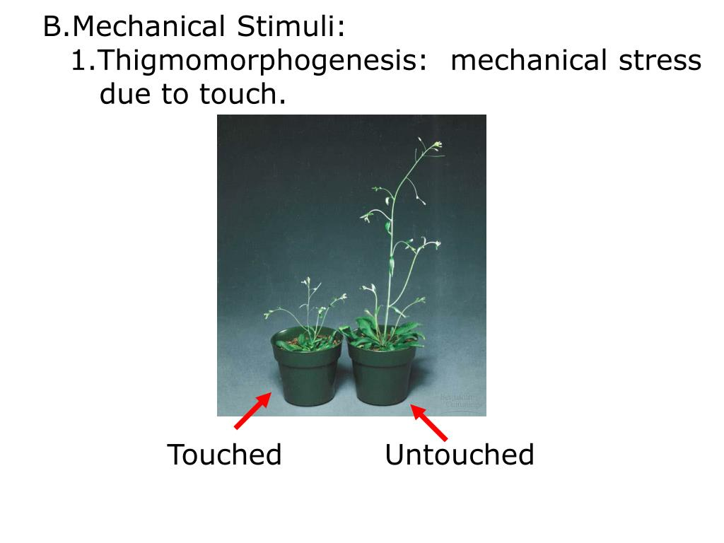 Mechanical Stimuli: