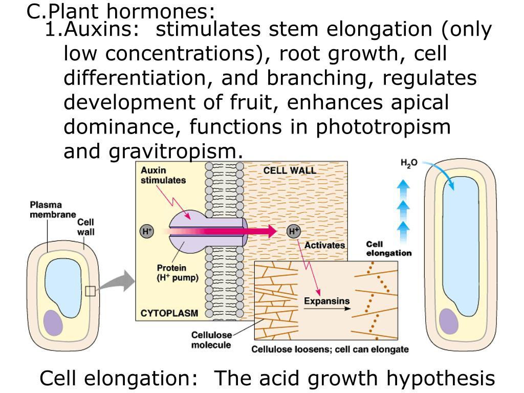 Plant hormones: