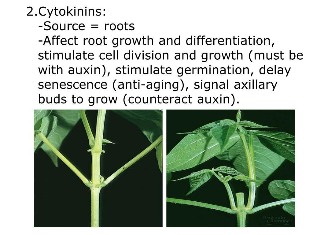 Cytokinins: