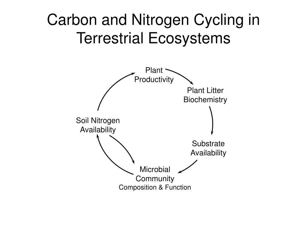 Carbon and Nitrogen Cycling in Terrestrial Ecosystems
