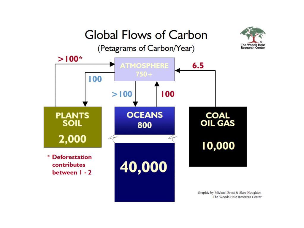 Global Carbon Budget