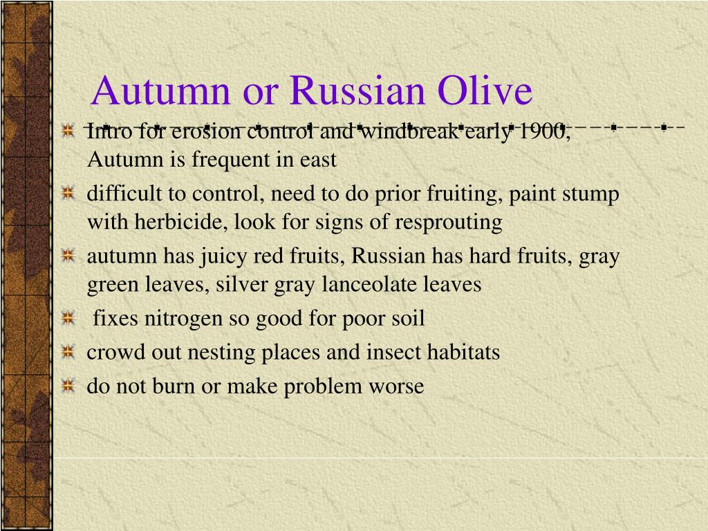 Autumn or Russian Olive