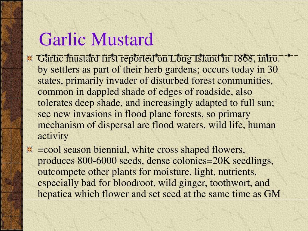 Garlic Mustard