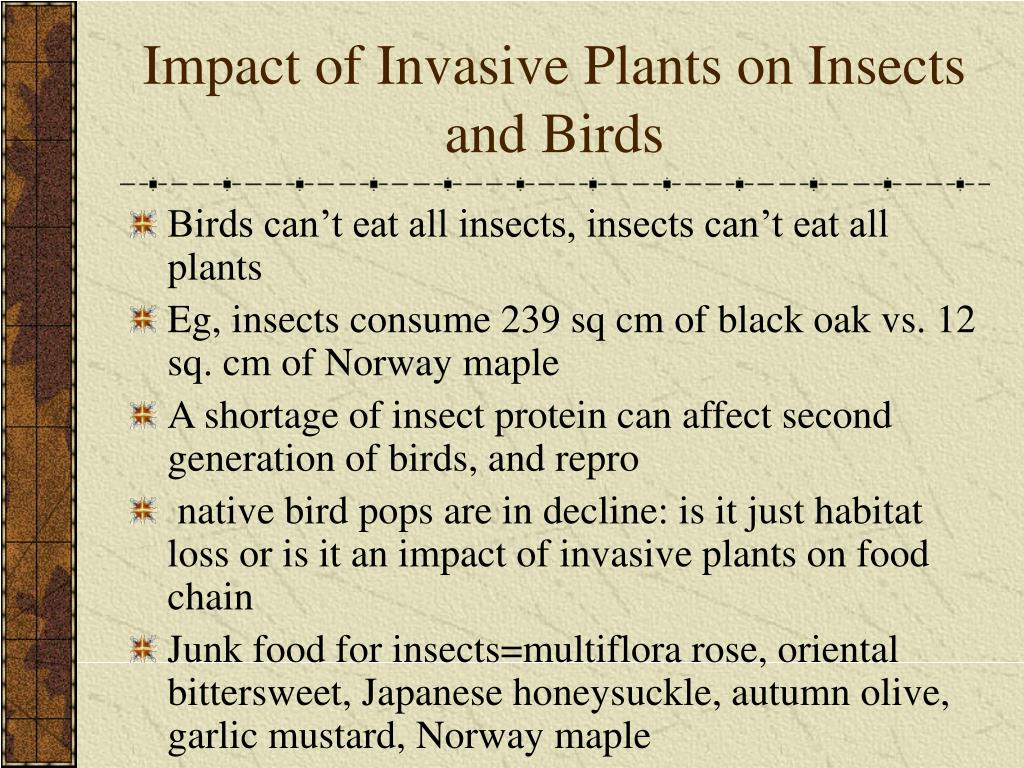 Impact of Invasive Plants on Insects and Birds