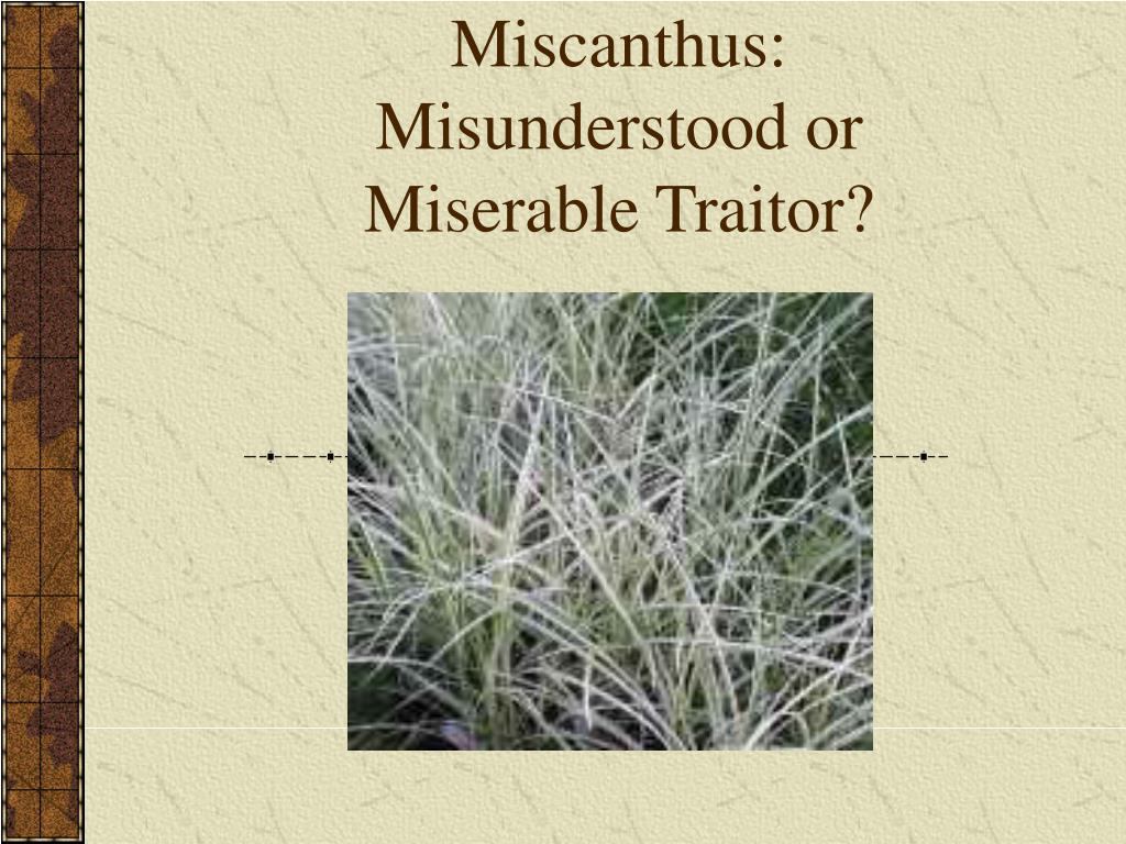 Miscanthus: Misunderstood or Miserable Traitor?