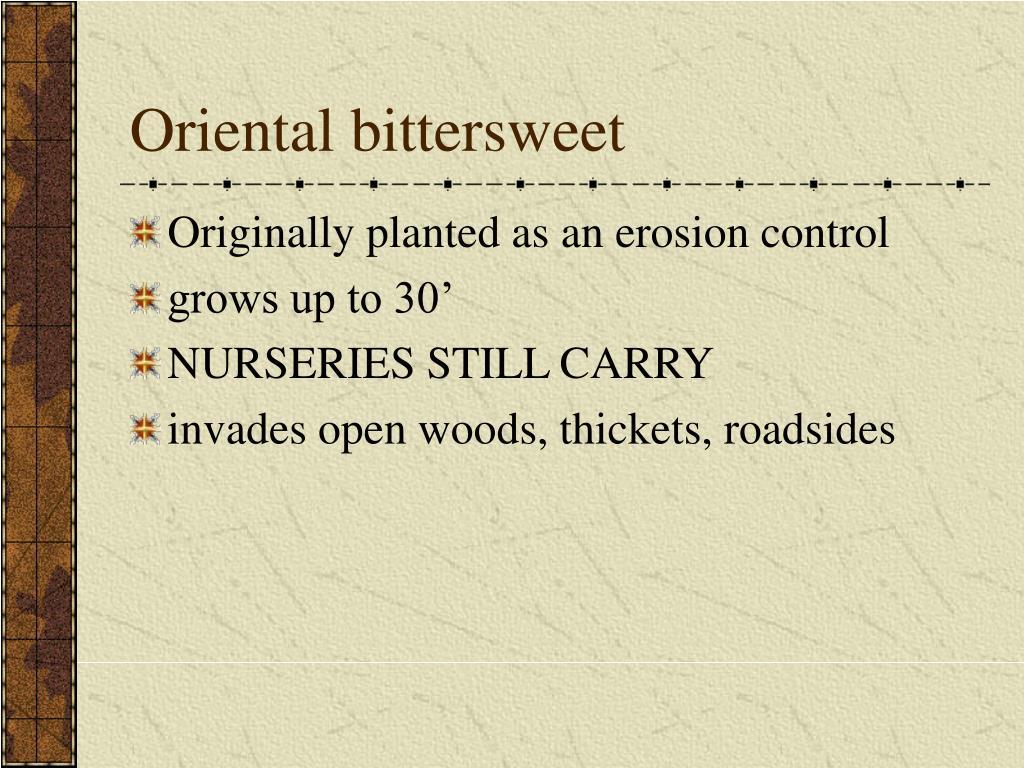 Oriental bittersweet