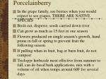 porcelainberry