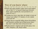tree of you know where