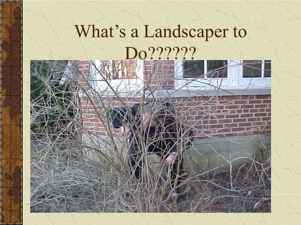 What's a Landscaper to Do??????