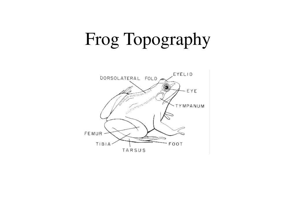 Frog Topography
