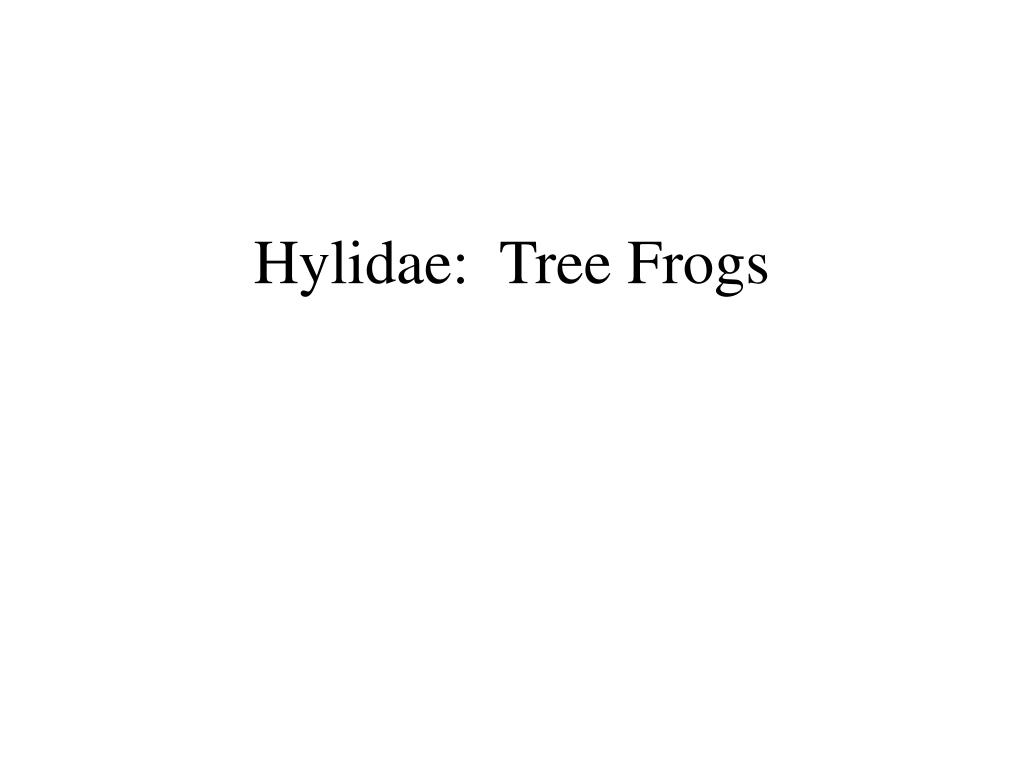 Hylidae:  Tree Frogs