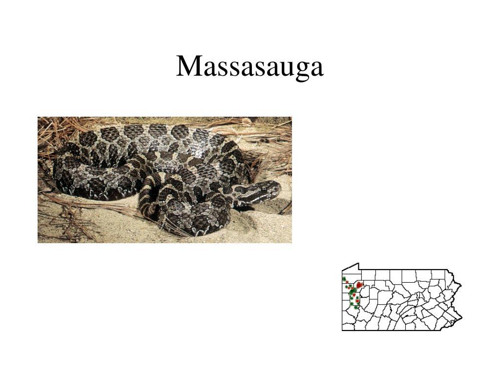 Massasauga