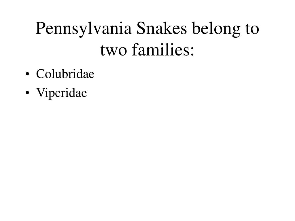 Pennsylvania Snakes belong to two families:
