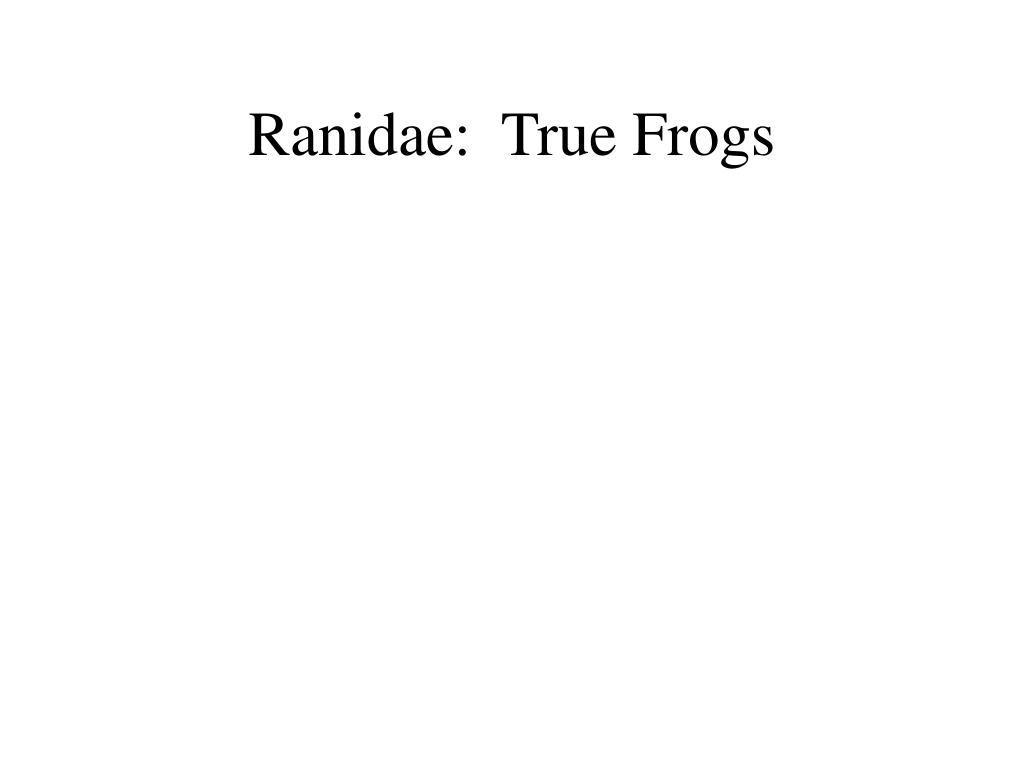 Ranidae:  True Frogs