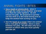 animal fights bites33