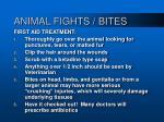 animal fights bites34