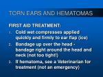 torn ears and hematomas39