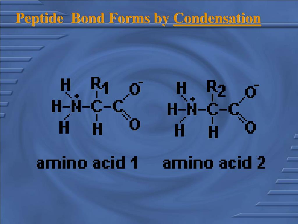 Peptide  Bond Forms by