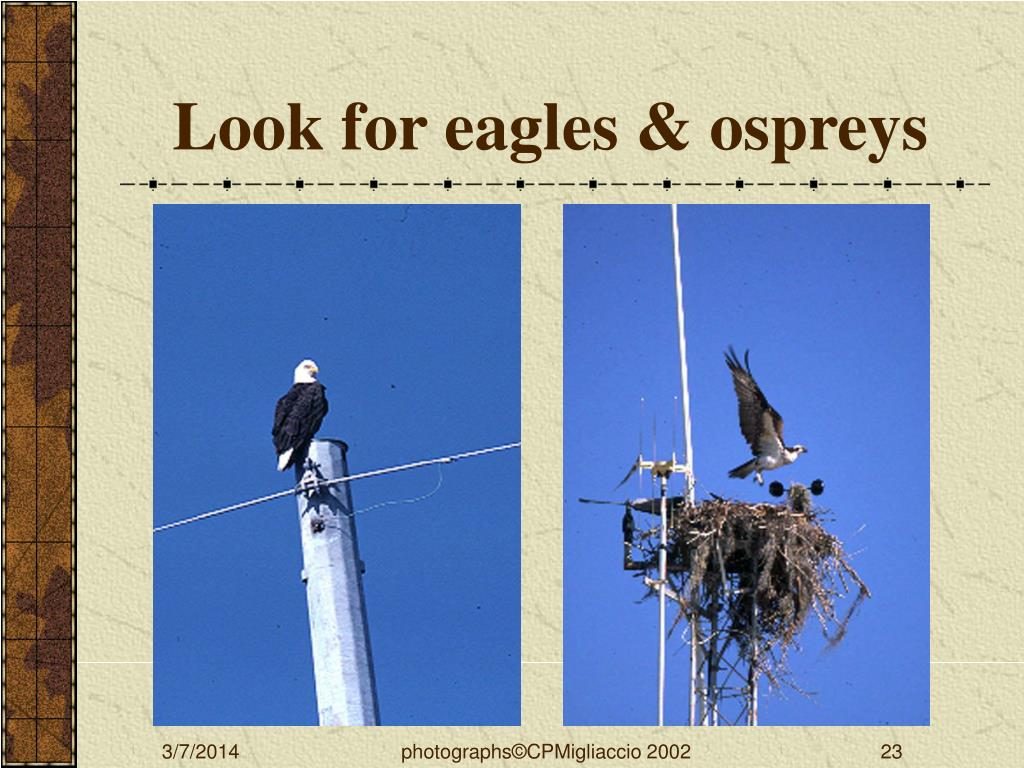 Look for eagles & ospreys