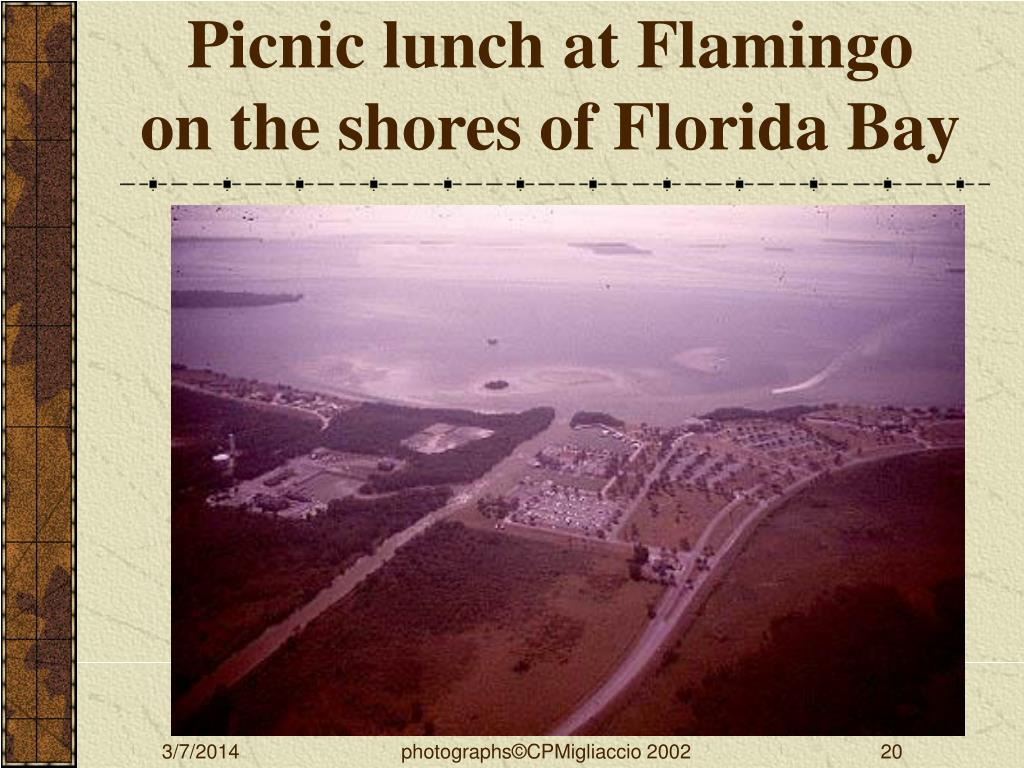 Picnic lunch at Flamingo