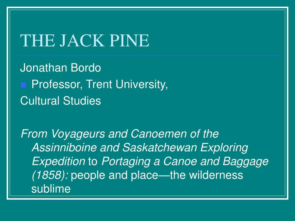 THE JACK PINE