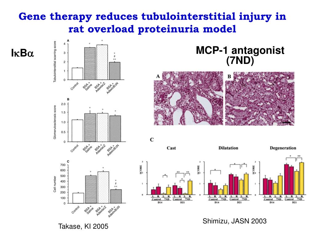 Gene therapy reduces tubulointerstitial injury in rat overload proteinuria model