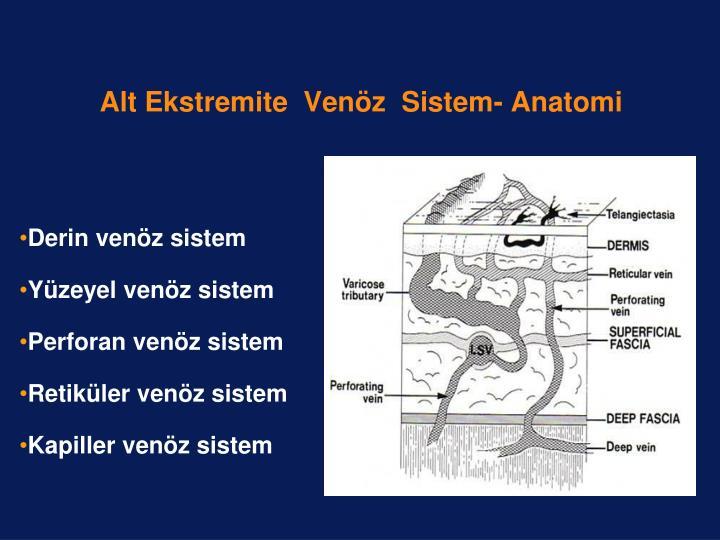 Alt Ekstremite  Venöz  Sistem- Anatomi