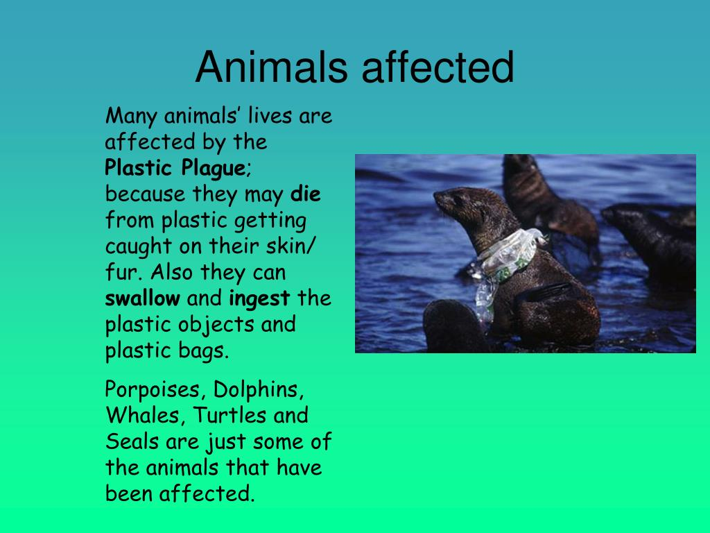 Animals affected