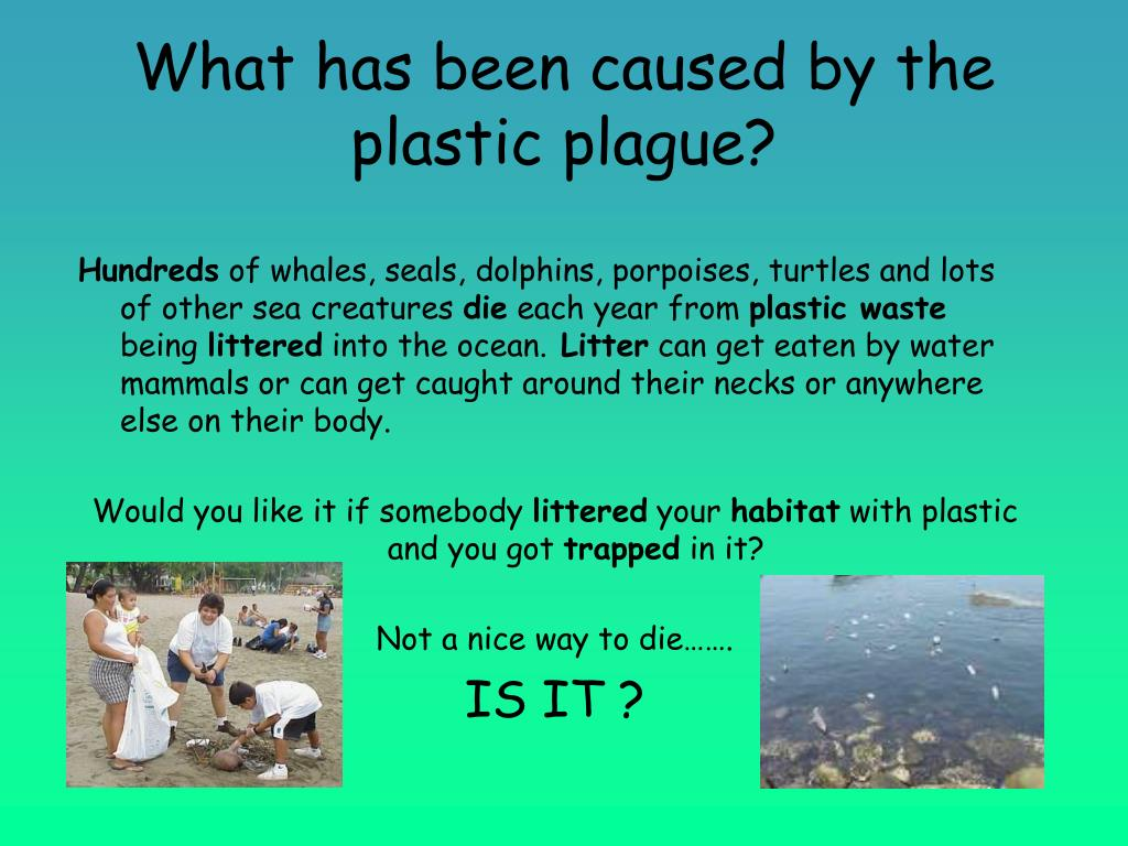 What has been caused by the plastic plague?
