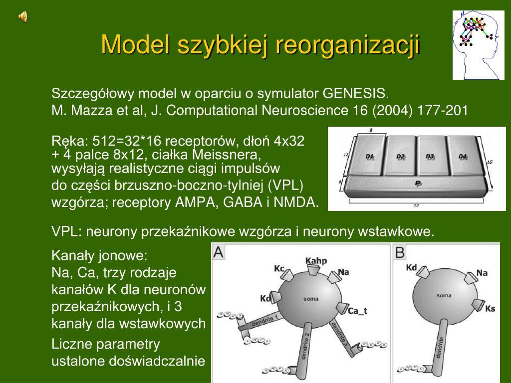 Model szybkiej reorganizacji