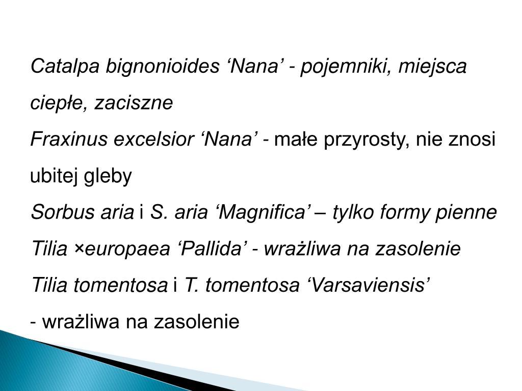 Catalpa bignonioides 'Nana' - pojemniki, miejsca ciepłe, zaciszne