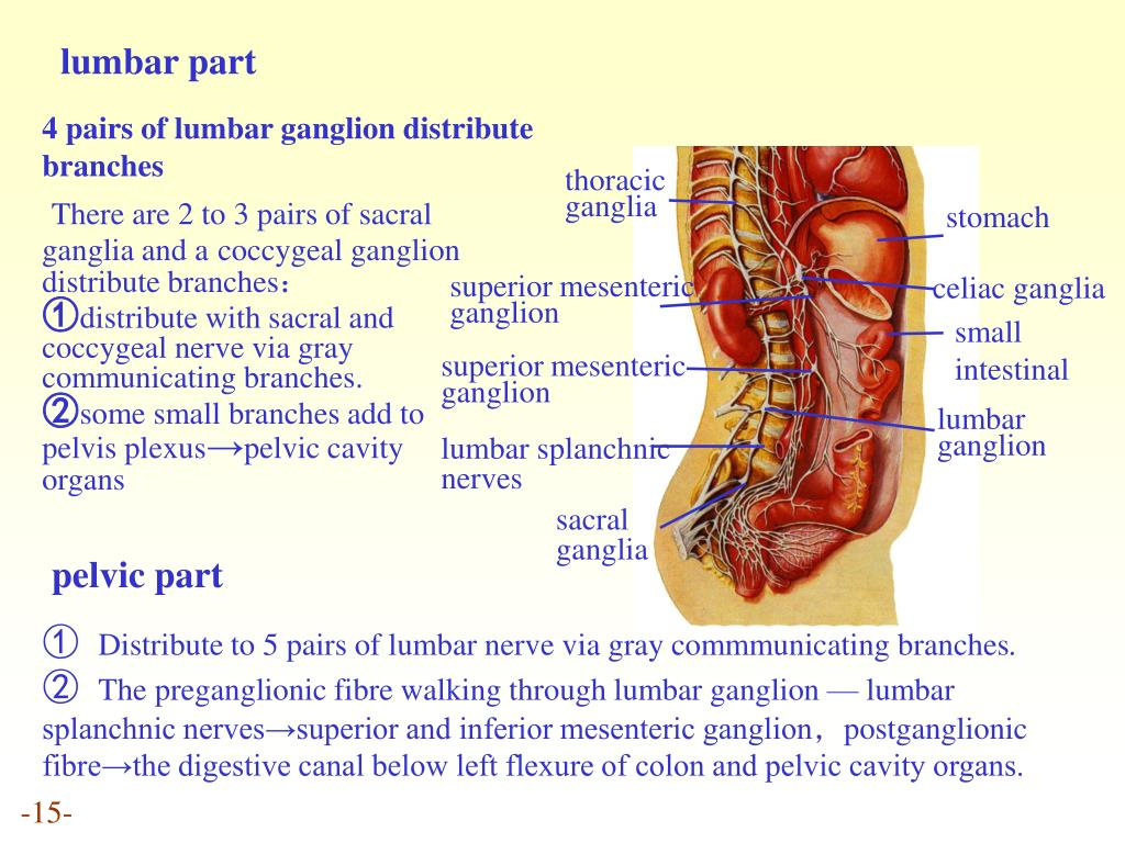 lumbar part