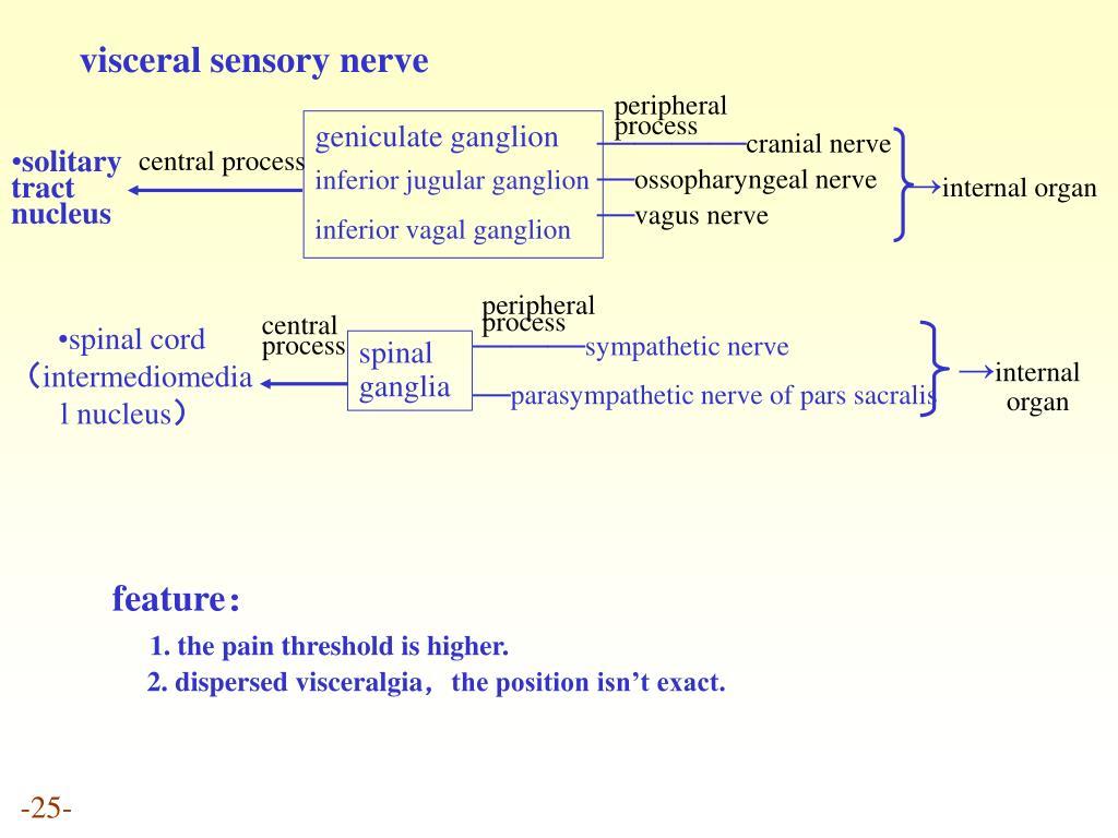 visceral sensory nerve