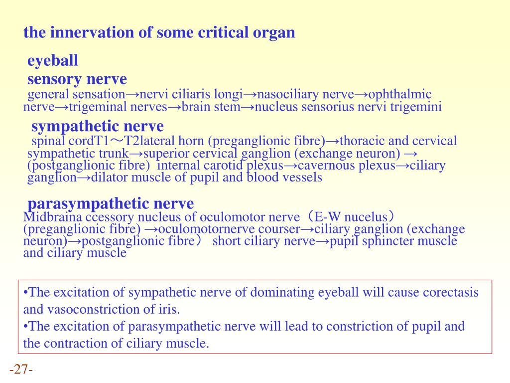 the innervation of some critical organ