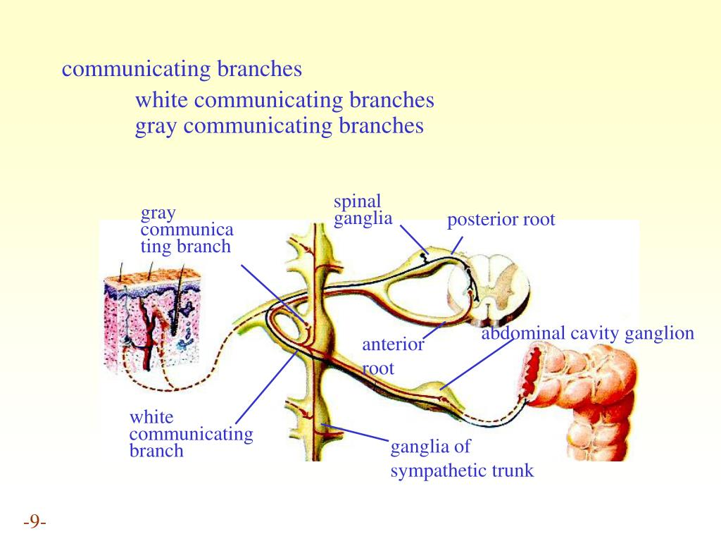communicating branches