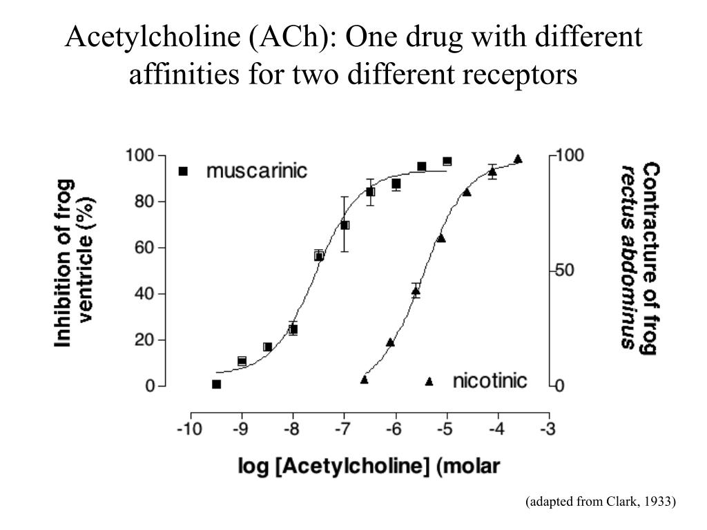 Acetylcholine (ACh): One drug with different affinities for two different receptors