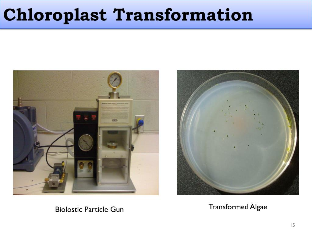 Chloroplast Transformation