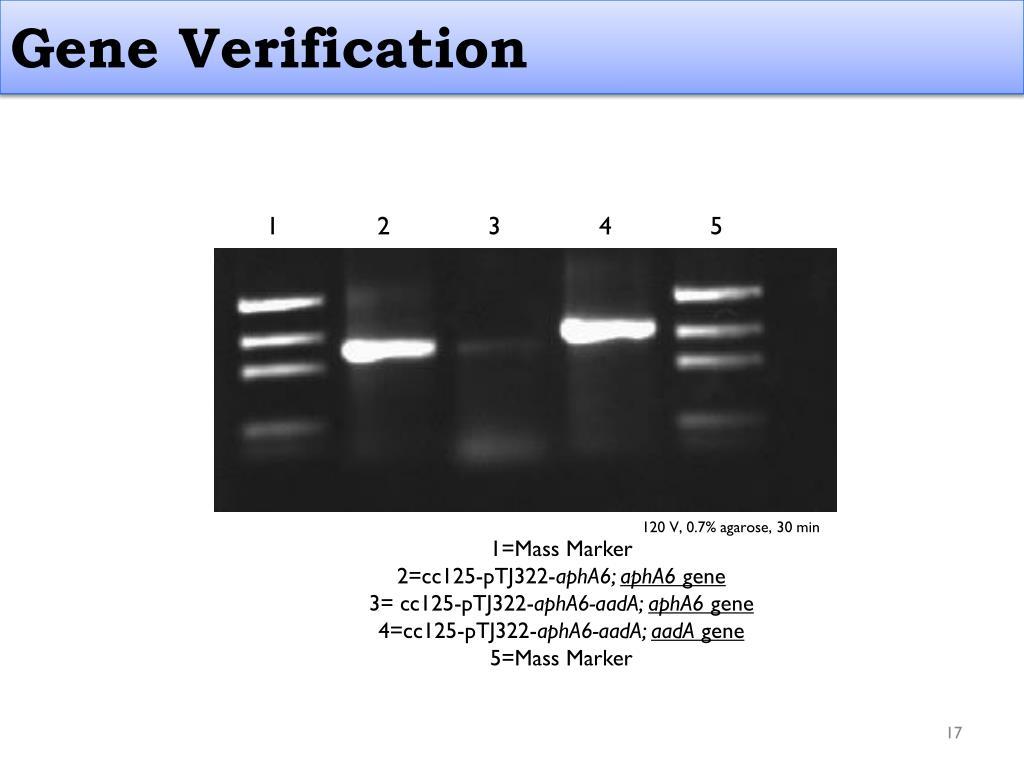 Gene Verification