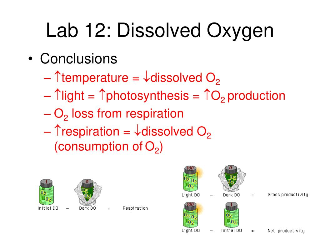 the effects of temperature on dissolved oxygen essay Chemosphere 2004 feb54(8):1255-65 effect of temperature and dissolved  oxygen on the growth kinetics of pseudomonas putida f1 growing on benzene  and.