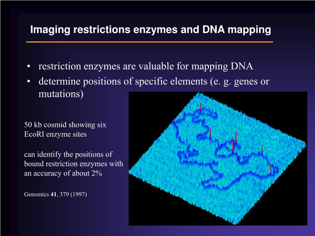 Imaging restrictions enzymes and DNA mapping