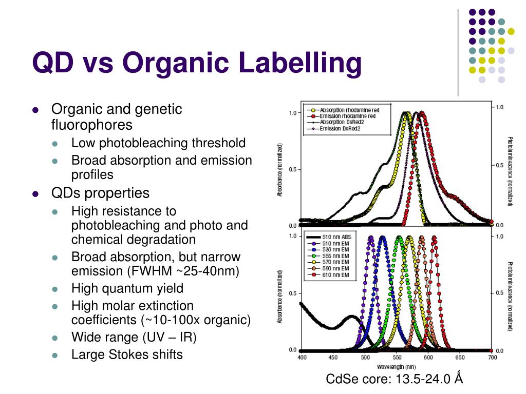 QD vs Organic Labelling