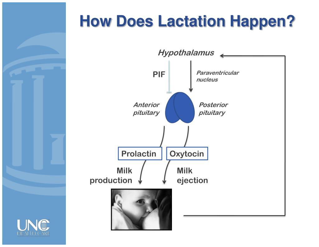 How Does Lactation Happen?
