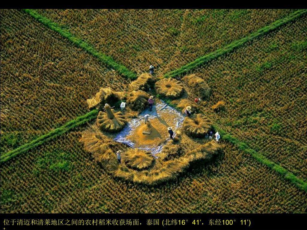 位于清迈和清莱地区之间的农村稻米收获场面,泰国